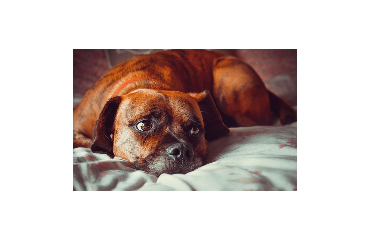 Is your dog's food affecting his mood?