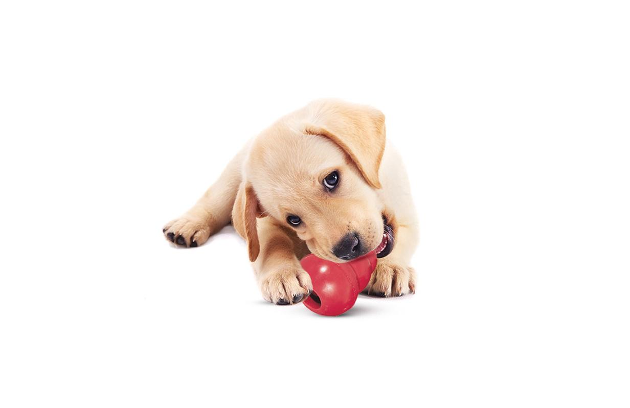 How to choose the right KONG for your dog