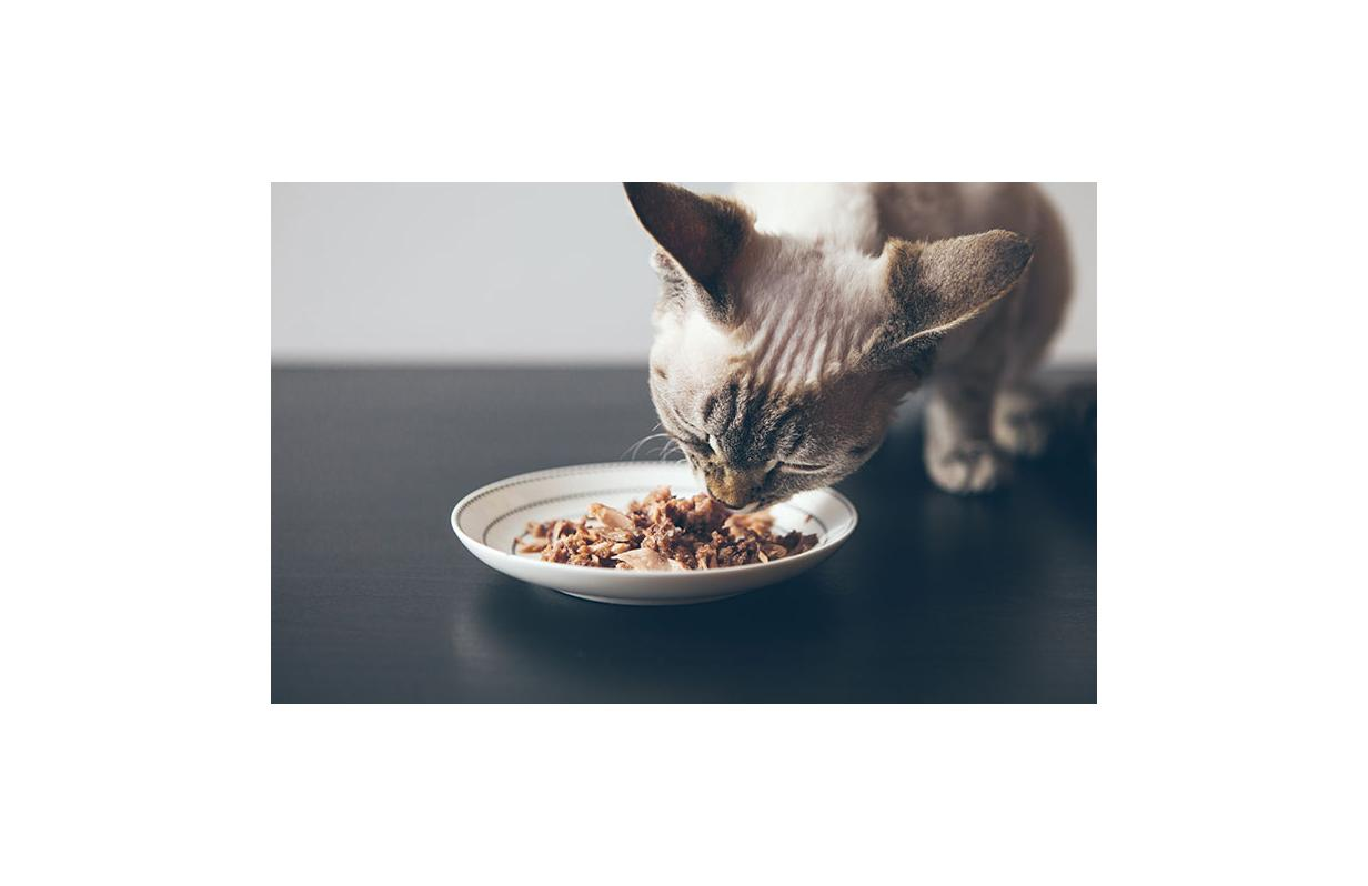Cat food toppers and why you might need them