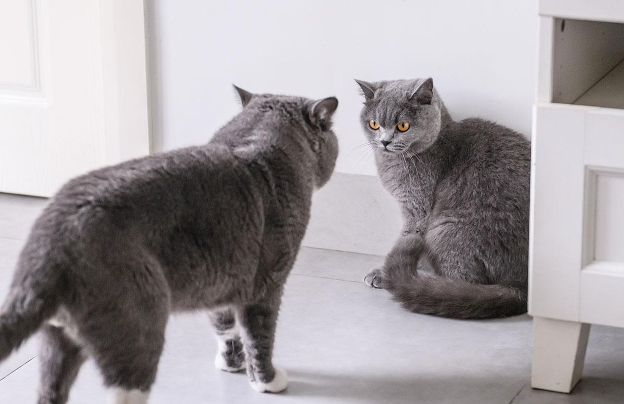 Help! My cat doesn't like her new brother