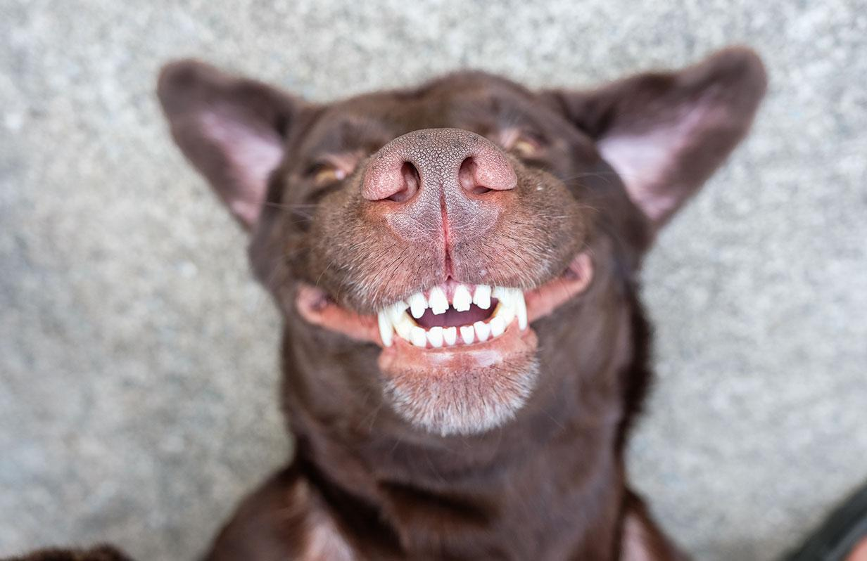 Your pet's smile matters too!