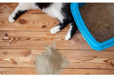 5 Steps to Litter Training your Cat