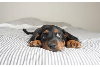 Struggling to name your pup? Here are our tips