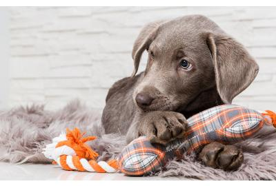 Pup misbehaving? It might be separation anxiety…