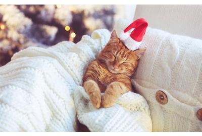 Cat vs the Christmas tree
