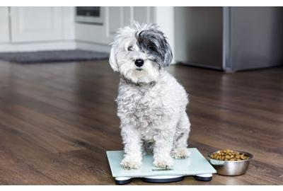 Is your overweight dog struggling to lose weight?