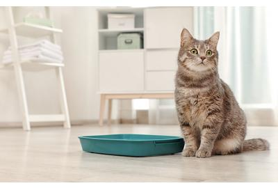 Potty training your dog or cat? Here are our top tips