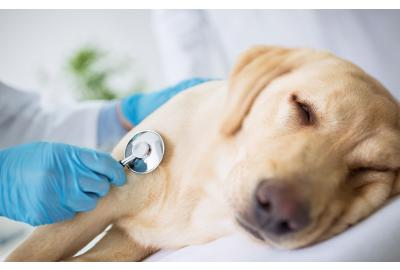 Pet cancer and diabetes awareness month
