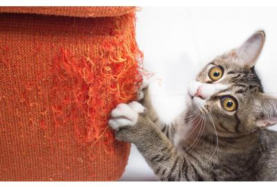 Why do cats scratch?