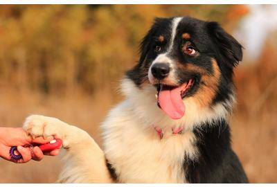 6 Essential Dog Training Gears to Ensure Success
