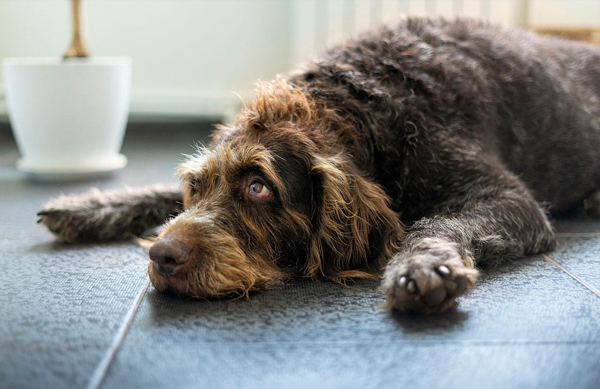 Beat the Heat This Summer with your Dog!
