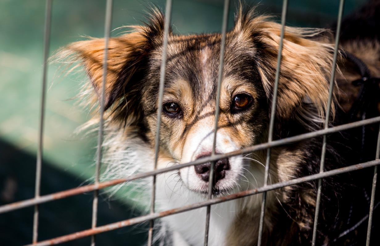 Things you should know about shelter dogs