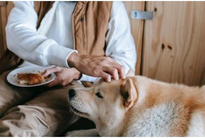 Keeping Them Happy and Healthy: How to Feed Your Senior Dog