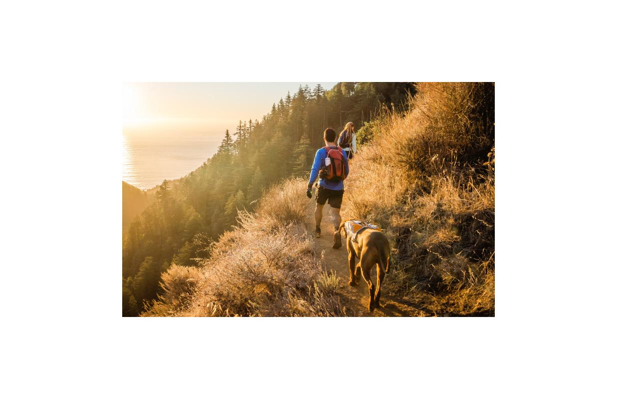 Adventures with your dog: what you need