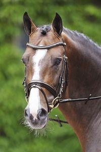 Schockemohle Paris Squared Diamond Bridle
