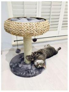 Fauna Paola Cat Playground