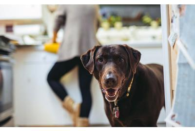 The things in your kitchen that can harm your dog…