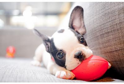 The Definitive Guide to Correctly Feeding Your New Puppy