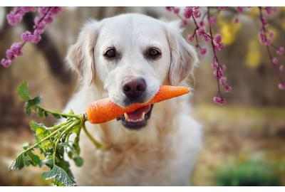 Thinking about putting your pet on a meat free diet?