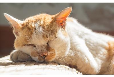Arthritis in cats: What you need to know