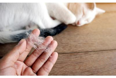 Dealing with Your Cat's Excessive Shedding