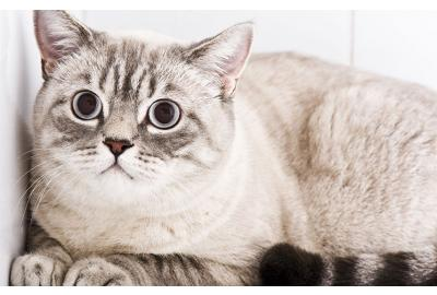 Three Ways to Help Your Anxious Cat