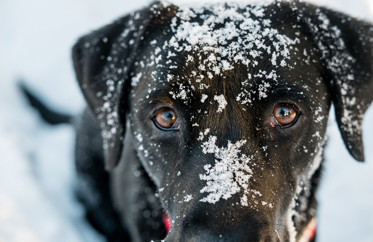 Cold weather tips for your pup