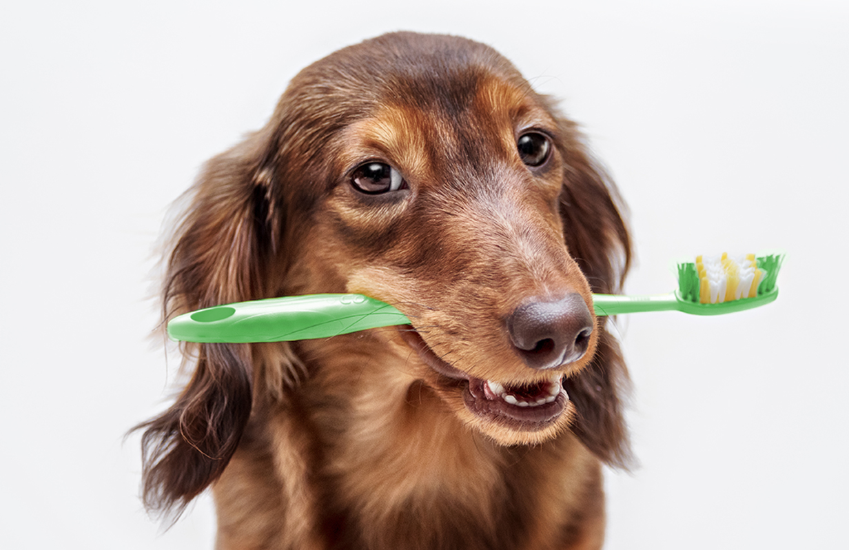 Why you need to take care of your pet's dental health