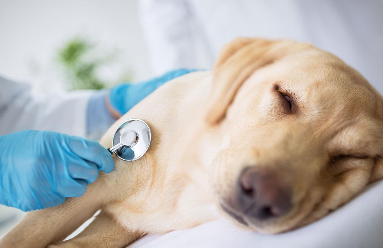 Pet cancer and diabetes awareness month