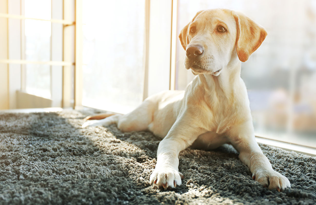 5 ways to exercise your dog indoors