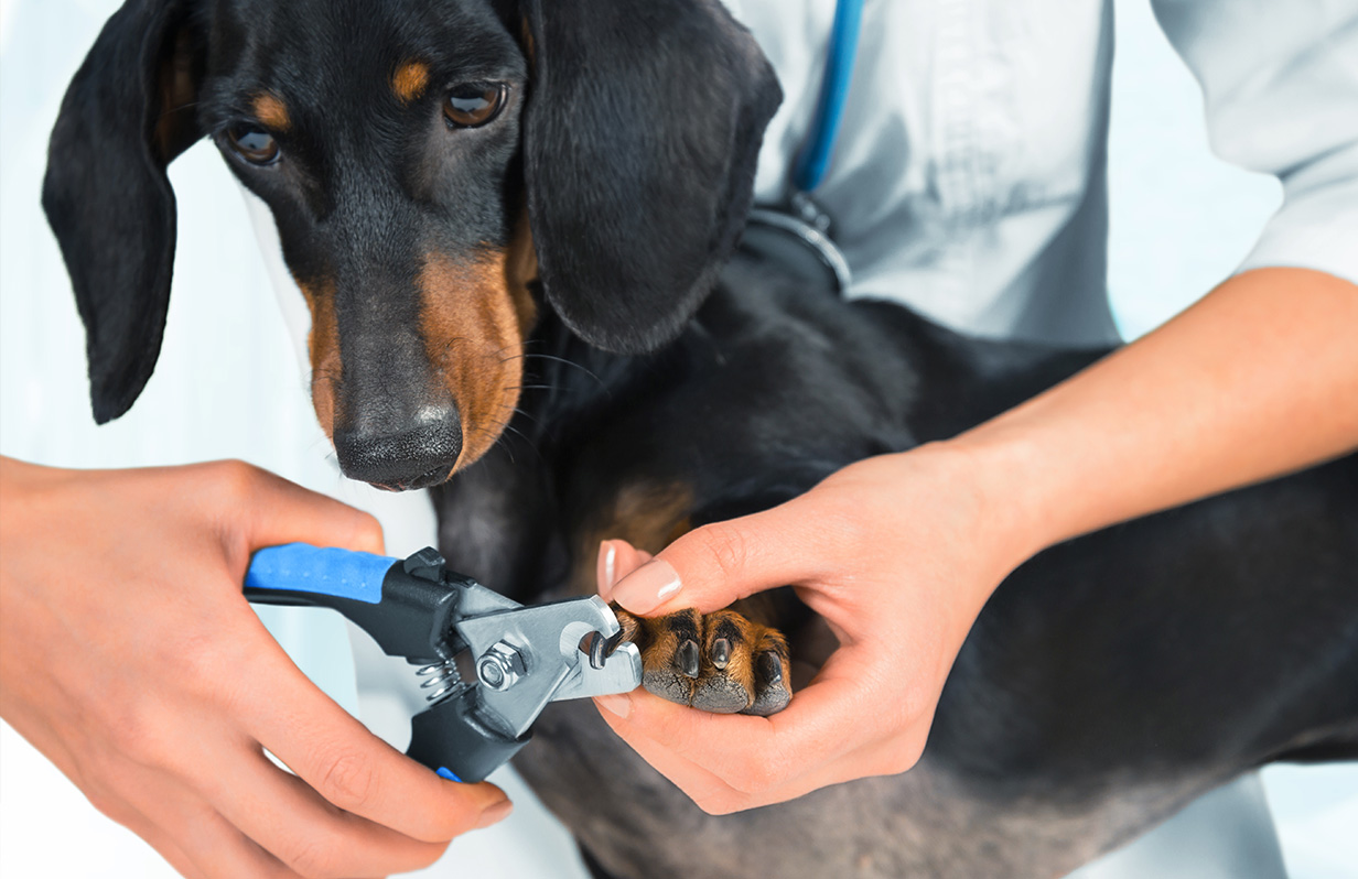 How to trim your pet's nails at home