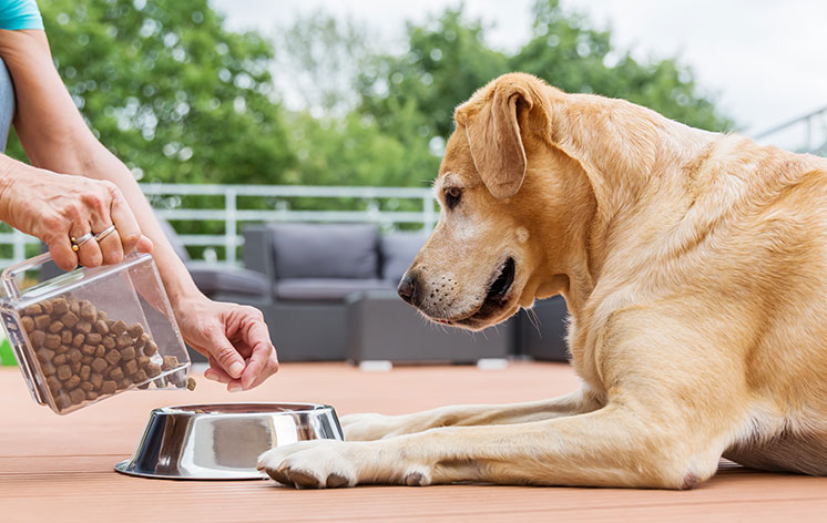 How to Care For a Malnourished Dog
