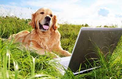 Skip the Hassles, Buy Pet Food Online