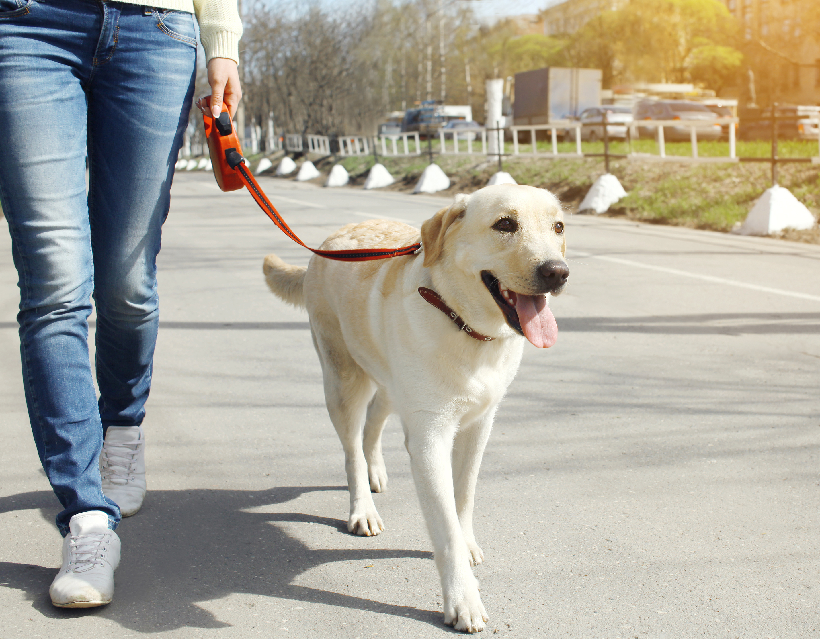 Let's get outside: Train and Walk Your Dog Month